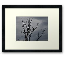 Raven silhouetted against grey sky Framed Print