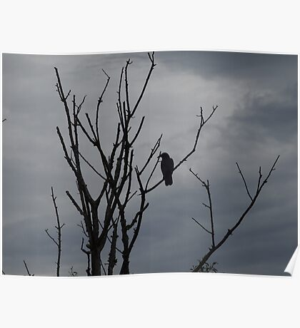 Raven silhouetted against grey sky Poster