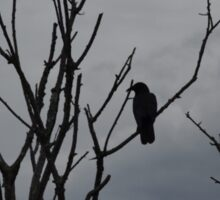 Raven silhouetted against grey sky Sticker