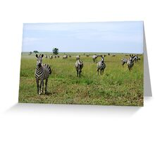 Four Zebra Greeting Card