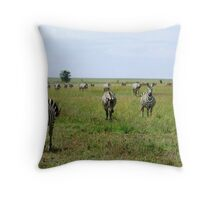 Four Zebra Throw Pillow