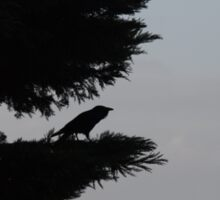 Raven in a tree, still and serene  Sticker
