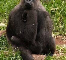 The Thinker by rflower