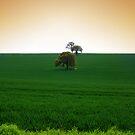 Wheat Field by naffarts