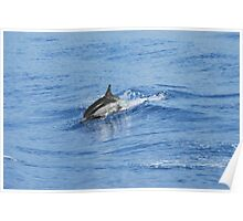 Ionian Dolphin Poster