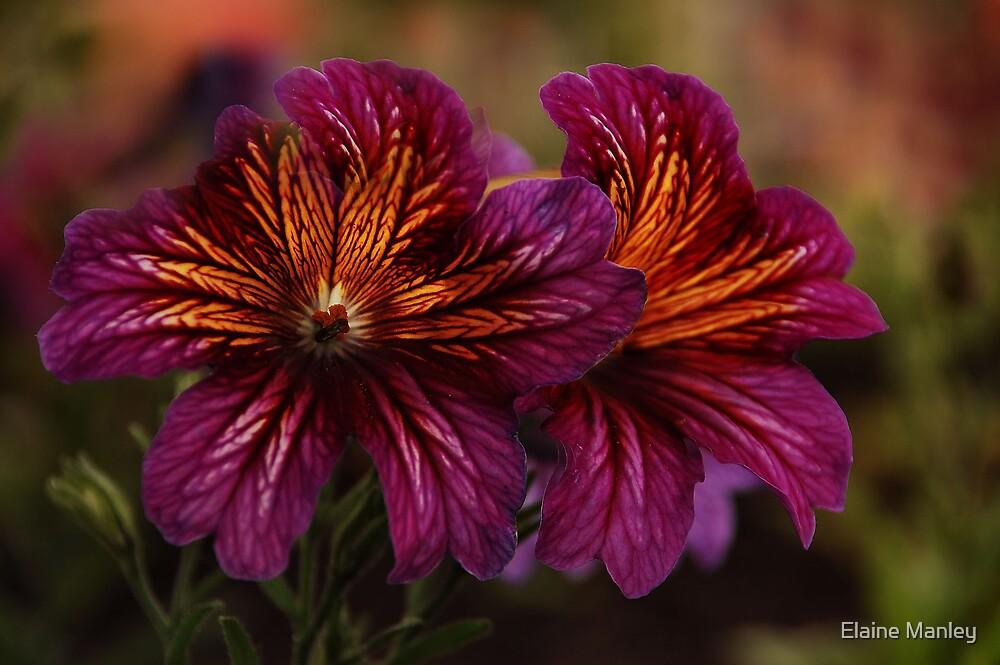 Flowers of Alberta  by Elaine  Manley