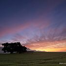 The First Green by Hougaard Malan