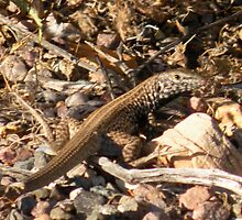 Lizard atop a mountain 2 by Bonnie Pelton