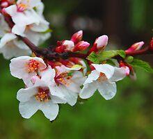 Raining Flowers by Antonia Diewold