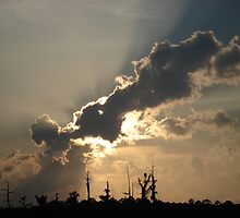 Sunset Over Swamp, May 26, 2009 by May Lattanzio
