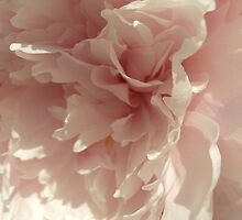 Peony by kalizoomba
