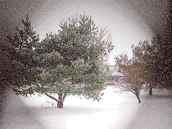 SNOWSTORM by Van Coleman