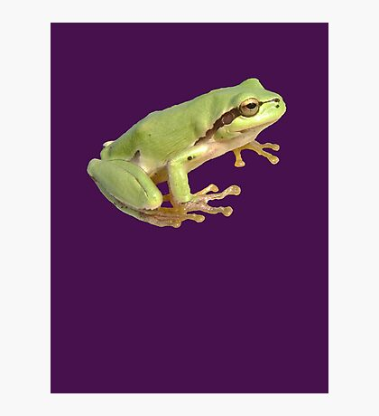 European Tree Frog Isolated Photographic Print