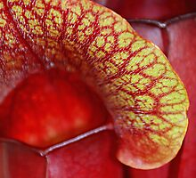 Carnivorous Red by Alixzandra