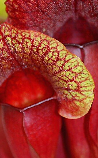 Carnivorous Red by Alixzandra