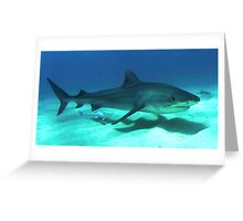 Awesome Tiger Shark Greeting Card