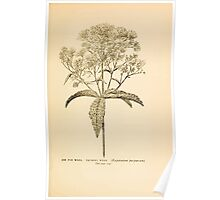 Harper's Guide to Wild Flowers 1912 Creevey, Caroline and Stickney, Alathea 103 Joy Pye Weed or Trumpet Weed Poster
