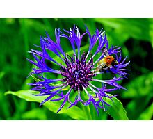 Buzz Off Will Ya Photographic Print