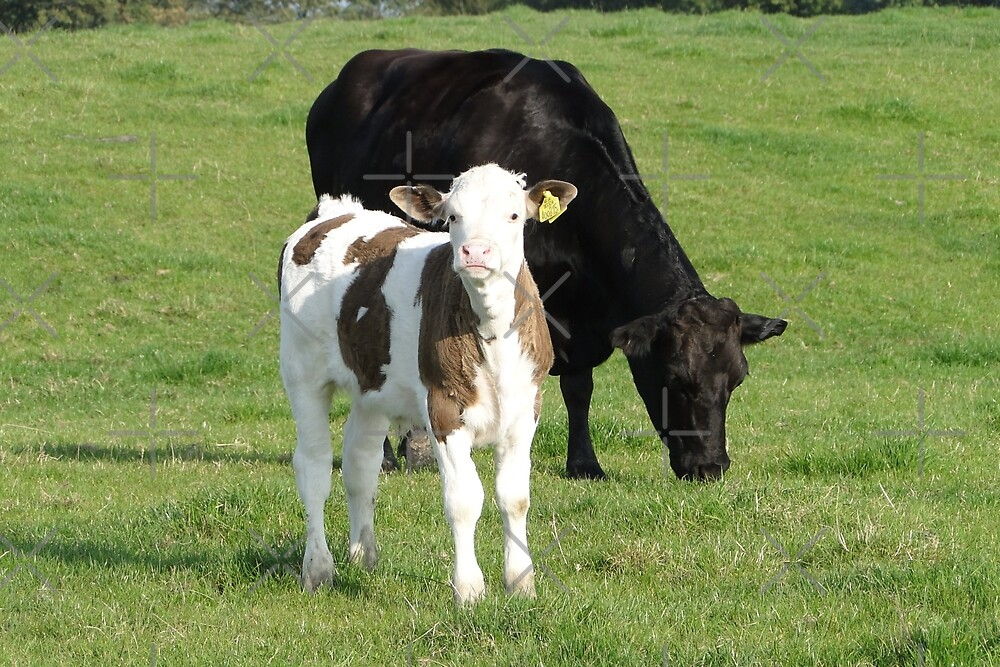 Moover and Milkshaker by Barrie Woodward