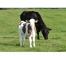 Moover and Milkshaker Photographic Print