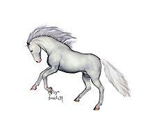 White Thoroughbred Type Horse Photographic Print
