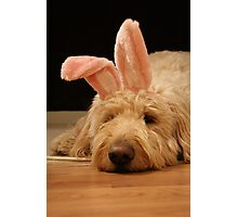wanna be a bunny? Photographic Print