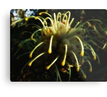 """""""Gentle Touch"""" Metal Print"""