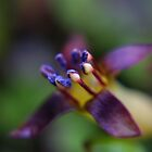 New Zealand's Tiny Beauty by missmoneypenny