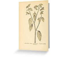 Harper's Guide to Wild Flowers 1912 Creevey, Caroline and Stickney, Alathea 058 Jewel Weed or Balsam or Touch Me Not Greeting Card
