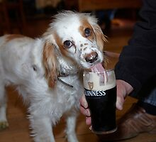 Maisie Likes Guinness  by Chris  Brookes