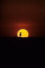Wildebeest Sunset by David Clarke