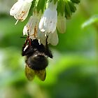 Bee or Bat............ by lynn carter