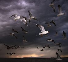 Seagull Storm by Gene Praag