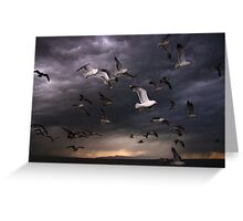 Seagull Storm Greeting Card