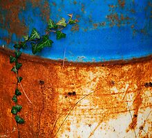 Ivy Against Blue and White Rusted Oil Drum by jojobob