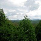 Cass, West Virginia by Fern Design