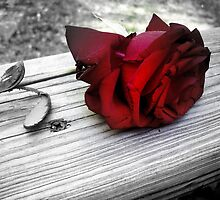 Red Rose by ripinamberlost