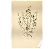 Harper's Guide to Wild Flowers 1912 Creevey, Caroline and Stickney, Alathea 101 Slender Gerardia Poster