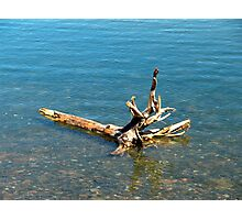 Washed Ashore Photographic Print