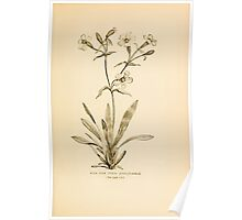 Harper's Guide to Wild Flowers 1912 Creevey, Caroline and Stickney, Alathea 085 Wild Pink Poster