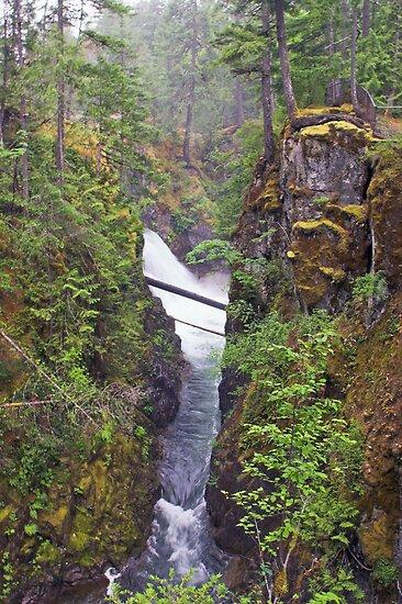 Little Qualicum Falls, Canada by Christopher Barton