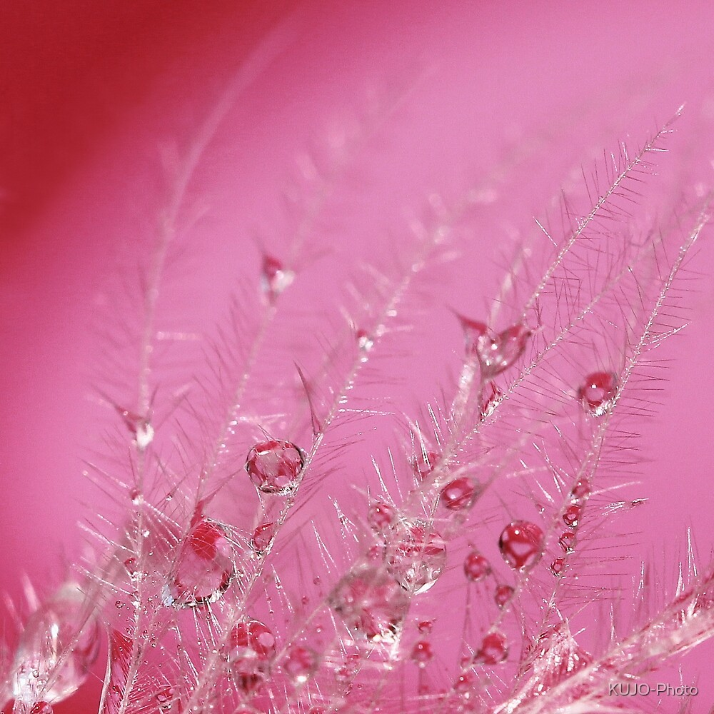 Pretty in Pink by KUJO-Photo
