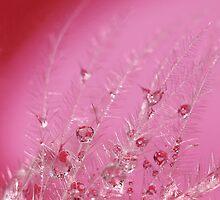 Pretty in Pink by KUJO-Photo