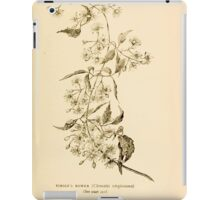 Harper's Guide to Wild Flowers 1912 Creevey, Caroline and Stickney, Alathea 135 Virgin's Bower iPad Case/Skin