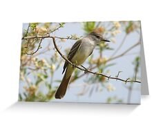 Brown-Crested Flycatcher Greeting Card