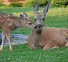 Deer Kisses  by Judy Grant