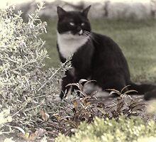 Cat in the garden........... by lynn carter
