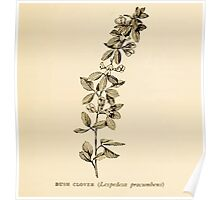 Harper's Guide to Wild Flowers 1912 Creevey, Caroline and Stickney, Alathea 108 Bush Clover Poster