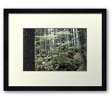dry stream, Olympic Peninsula, USA Framed Print