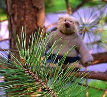 Rufus the Lumberjack.......... by lynn carter